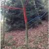 I vandali dello spray nel bosco dei bambini